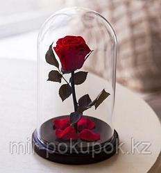 Роза в колбе Красная, Маленькая, Алматы
