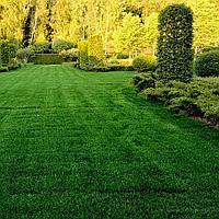 Консультация по уходу и лечению зелёных насаждений