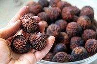 Черный орех (плоды) 50 гр АЛТАЙ В НАЛИЧИИ В АЛМАТЫ