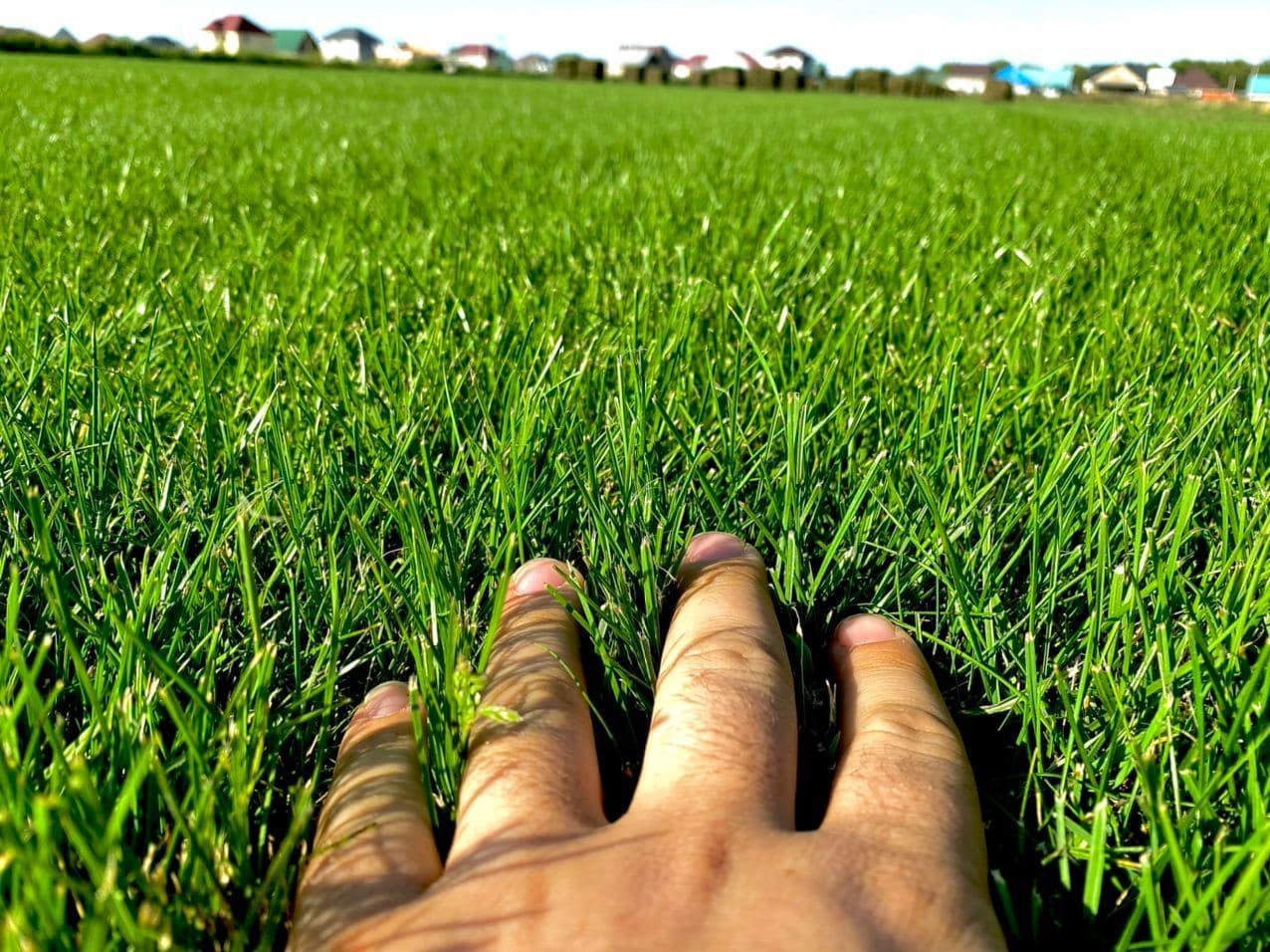 Укладка газона, озеленение, ландшафтный дизайн, поливная система - фото 2