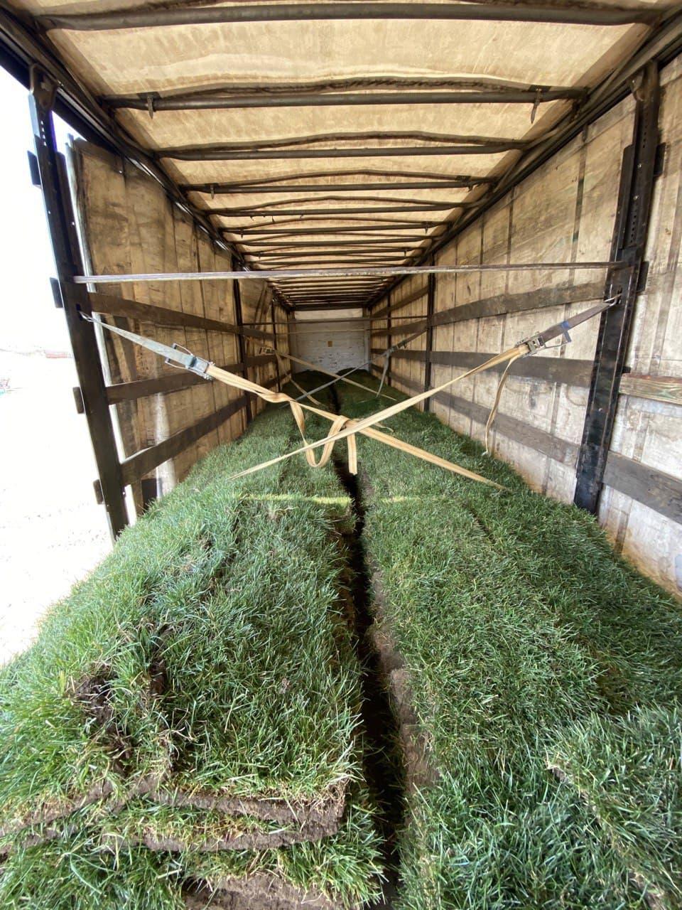 Укладка газона, озеленение, ландшафтный дизайн, поливная система - фото 3