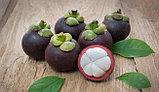 Mangosteen(мангостин) - крем от растяжек, фото 3