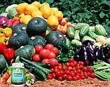 BioGrow (Биогров) - биоактиватор роста растений, фото 3