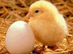 Бытовой инкубатор «Несушка» на 104 яйца. С вентилятором, фото 4
