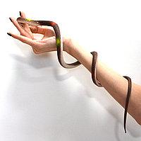Резиновая змея игрушка антистресс темная