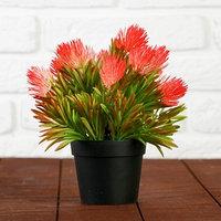 Бонсай 'Пышный куст цветов' 10х20 см микс
