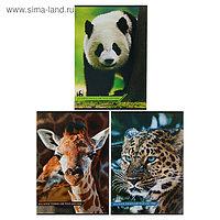 Тетрадь А4, 48 листов в линейку «Дикие животные», картонная обложка, МИКС