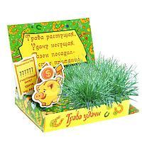 """Подарок в открытке растущий """"Трава удачи"""""""
