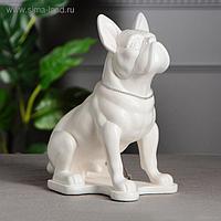 "Копилка ""Собака Бульдог"", белая, 30 см"