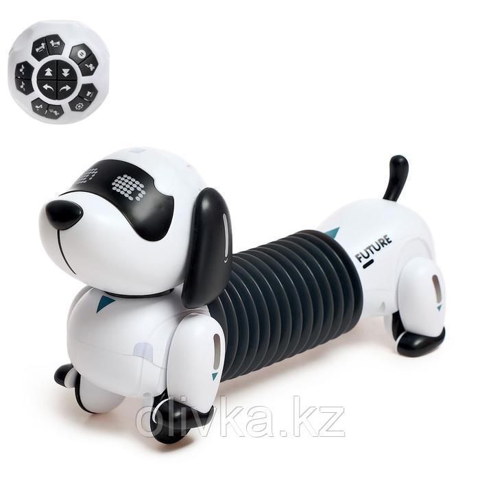 Робот-собака интерактивный «Такса», световые и звуковые эффекты