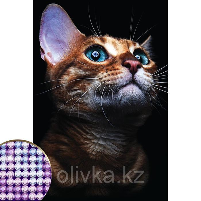 Алмазная вышивка с частичным заполнением «Взгляд кошки» 20 х 30 см на холсте