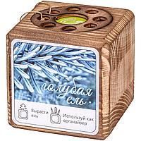 Набор для выращивания с органайзером «Экокуб Burn», ель голубая (артикул 10608.05)