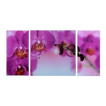 """Картина модульная на стекле """"Орхидеи""""  2-25*50, 1-50*50 см   100*50см"""