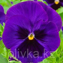Семена цветов Виола виттрока Экстрада Блю Блотч 1000 шт