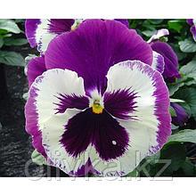 Семена цветов Виола виттрока Экстрада Виолет Фейс 1000 шт