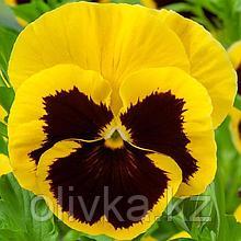 Семена цветов Виола виттрока Экстрада Еллоу Блотч 1000 шт