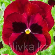 Семена цветов Виола виттрока Экстрада Ред Блотч 1000 шт