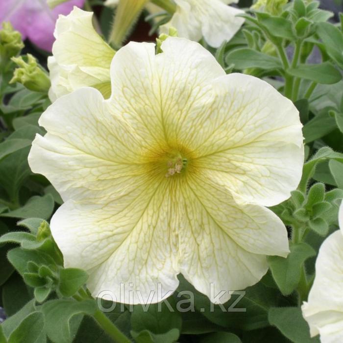 Семена цветов Петуния крупноцветковая Призма Саншайн 1000 шт