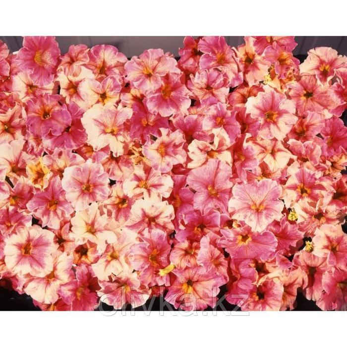 Семена цветов Петуния крупноцветковая Дольче Фламбе 1000 шт