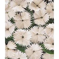 Семена цветов Гвоздика гибридная Идеал Селект Вайт 1000 шт