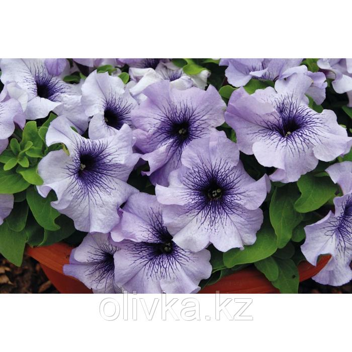 Семена цветов Петуния Лимбо GP Блю Вейн 1000 шт