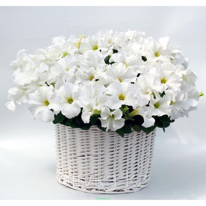 Семена цветов Петуния крупноцветковая Капри Вайт 1000 шт