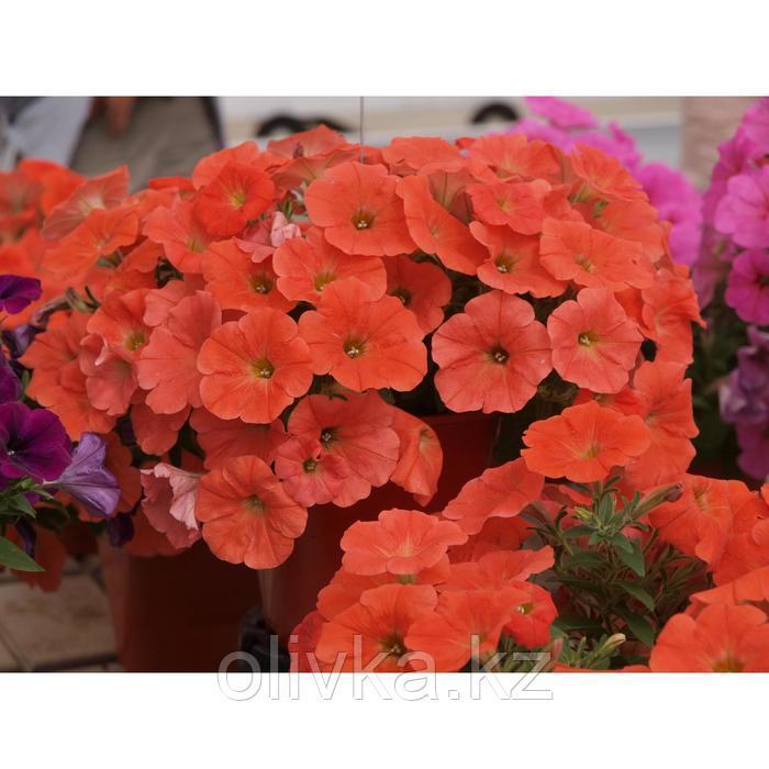 Семена цветов Петуния многоцветковая Аморе Мио Ред 1000 шт