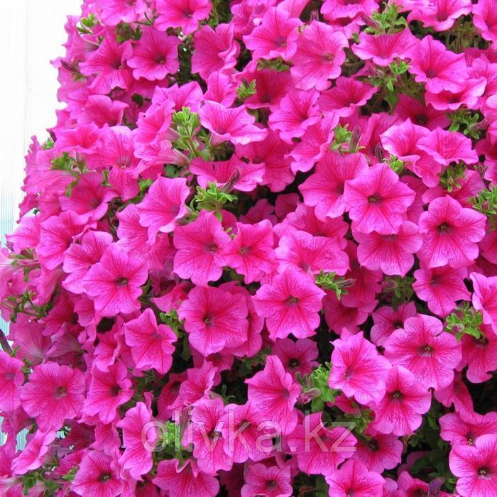 Семена цветов Петуния ампельная многоцветковая Нуволари Дасти Морн 1000 шт