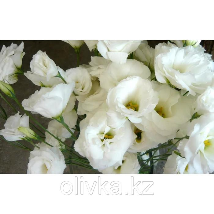 Семена цветов Эустома Сапфир Вайт 1000 шт