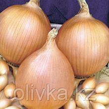 """Лук-севок """"Стурон"""" , 10/21, Голландия 0,5 кг (+/- 10%)"""