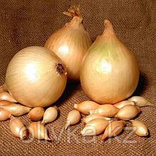 """Лук-севок """"Сеттон"""" , 10/21, Голландия 0,5 кг (+/- 10%)"""