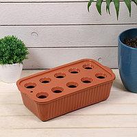 Лоток для выращивания зелёного лука, 29 × 16 × 8,5 см, 10 лунок, терракотовый