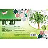 """Набор для выращивания домашних цветов """"Нолина"""", фото 2"""
