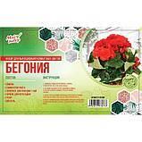 """Набор для выращивания домашних цветов """"Бегония"""", фото 2"""