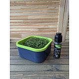 Набор семян «Моя микрозелень», бутылка с дозатором, «Здоровья клад», набор 6 шт., фото 6