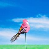 """Штекер декоративный для комнатных растений """"Птичка"""" 3х3см, 8см МИКС, фото 2"""
