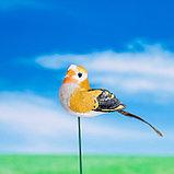 """Штекер декоративный для комнатных растений """"Птичка"""" 3х3см, 8см МИКС, фото 4"""