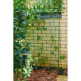 Сетка садовая, 1,5 × 20 м, ячейка 40 × 40 мм, зелёная, фото 3