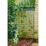 Сетка садовая, 1,5 × 20 м, ячейка 55 × 55 мм, зелёная, фото 3