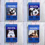 Ящик почтовый без замка (с петлёй), вертикальный, «Фото», МИКС, синий, фото 6