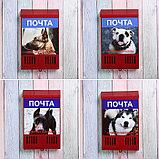 Ящик почтовый без замка (с петлёй), вертикальный, «Фото», МИКС, красный, фото 6