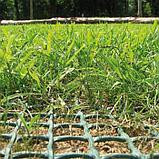 Сетка газонная, 2 × 30 м, ячейка 3,5 × 3,3 см, TR Green, фото 3