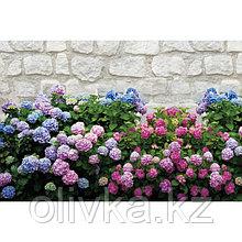 Фотобаннер, 250 × 150 см, с фотопечатью, люверсы шаг 1 м, «Цветы»