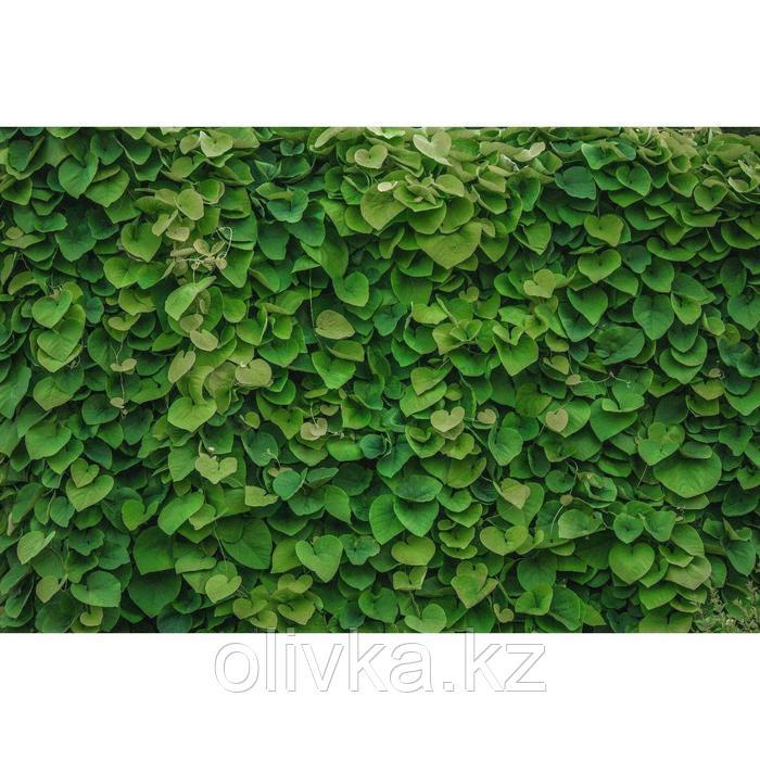 Фотобаннер, 250 × 200 см, с фотопечатью, люверсы шаг 1 м, «Зелёная стена»