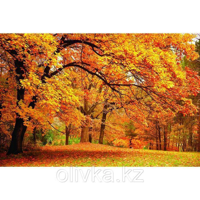 Фотобаннер, 250 × 200 см, с фотопечатью, люверсы шаг 1 м, «Осенний клён»