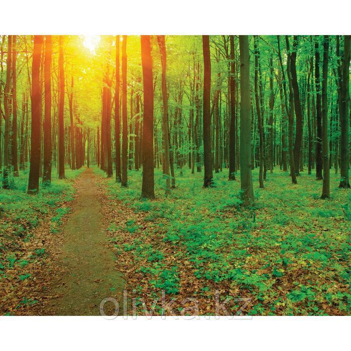Фотобаннер, 250 × 200 см, с фотопечатью, люверсы шаг 1 м, «Лесная тропа»