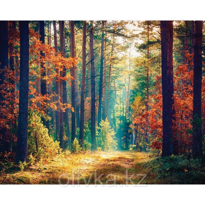 Фотобаннер, 250 × 200 см, с фотопечатью, люверсы шаг 1 м, «Осенний лес»
