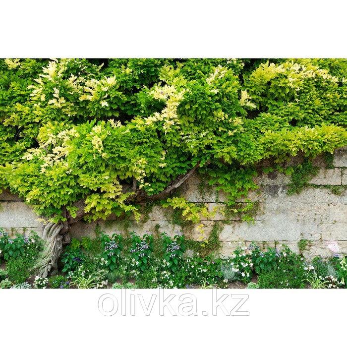 Фотобаннер, 300 × 200 см, с фотопечатью, люверсы шаг 1 м, «Лиана»