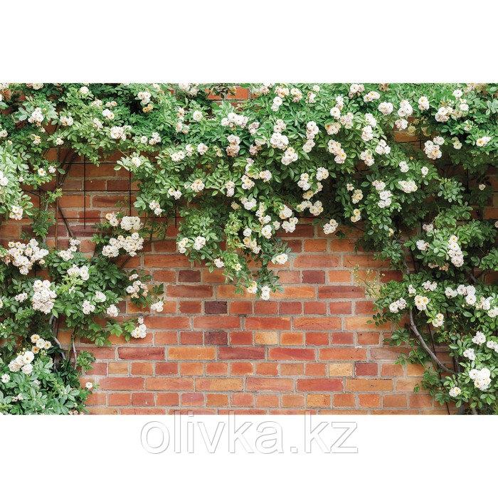 Фотобаннер, 300 × 200 см, с фотопечатью, люверсы шаг 1 м, «Белые цветы»