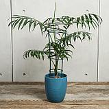 Поддержка для растений, h = 40,5 см, цвет МИКС, фото 2